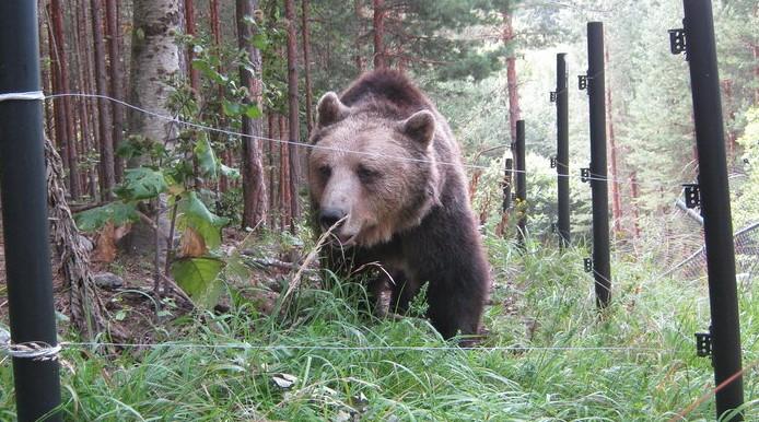 природа животные медведи Болгария